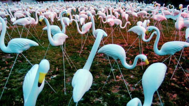 arty flamingos